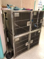 Used Veterinary Equipment for Sale | VEEN